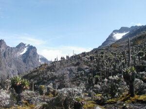 Rwenzori trekking