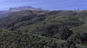 Mt Elgon panorama copia